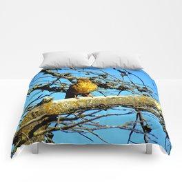 Falkland Island Thrush Comforters