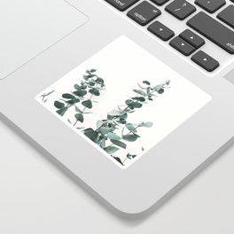 Eucalyptus Leaves Sticker