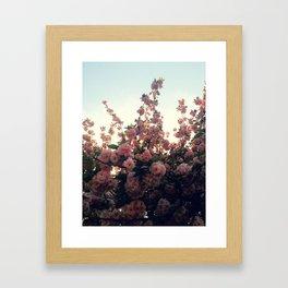 Gazing Up Framed Art Print
