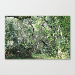 Hiking in Florida Canvas Print