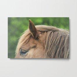 Horse hair Metal Print