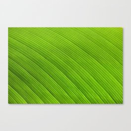 Green 8869 Canvas Print