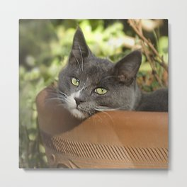 Here's Looking at YOU, Kid! Metal Print