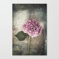 hydrangea Canvas Prints featuring Hydrangea  by Maria Heyens