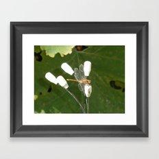 Dainty Dragonfly Framed Art Print