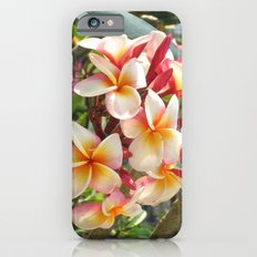 rosa Frangipane iPhone 6s Slim Case
