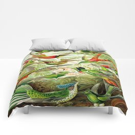 Kunstformen der Natur (Art Forms in Nature)a book of lithographic and halftones. Hummingbirds Comforters