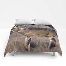 White Tail Deer  Comforters