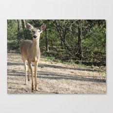 Deer Sighting Canvas Print
