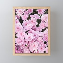 A Sea of Light Pink Chrysanthemums #1 #floral #art #Society6 Framed Mini Art Print