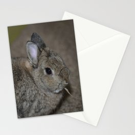 Pumpkin munching on some hay Stationery Cards