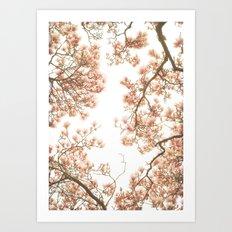 Magnolia Tree Looking Up Art Print