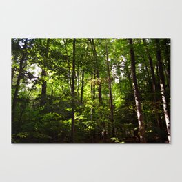 Forest // Silent In The Trees  Canvas Print