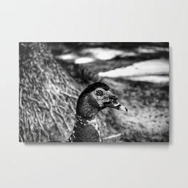 R U Looking at Me? - Black & White Metal Print
