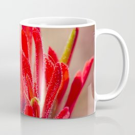 Indian Paintbrush Wildflower Coffee Mug