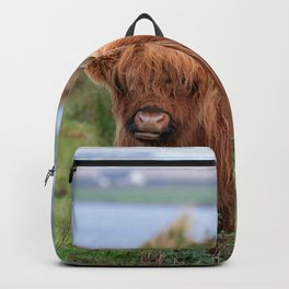Long haired Highland cattle - Highland cow, Highlander, Heilan coo - Thurso, The Highlands, Scotland Backpack