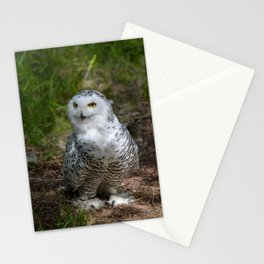 Alaskan Snowy Owl - Summer Stationery Cards