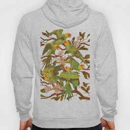 The extinction of the Carolina Parakeet. Hoody