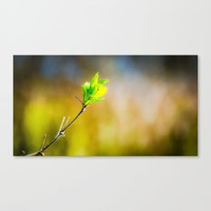 a bit green Canvas Print