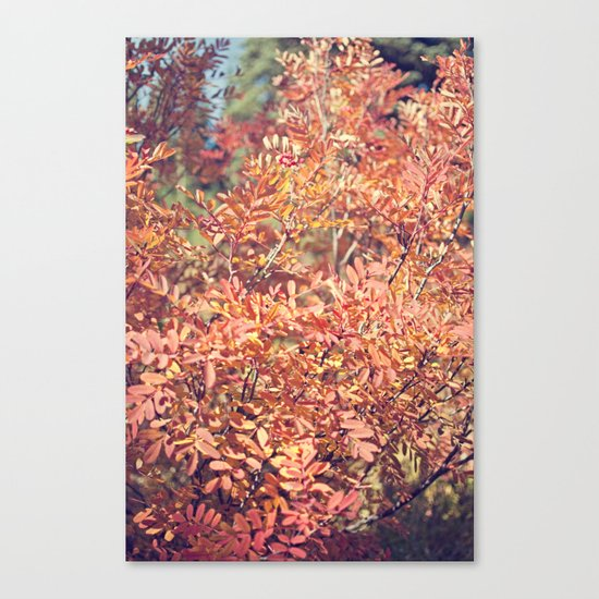 Red Fall Canvas Print
