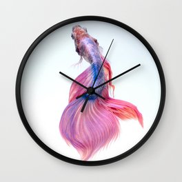 CLOSE UP - SIAMESE - FIGHTING FISH Wall Clock