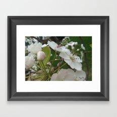 Plum Buds and Blossoms Framed Art Print
