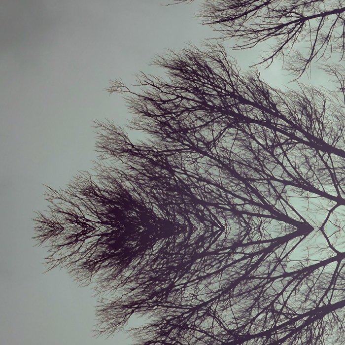Treeflection I Leggings