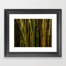 Bamboo Dreams Framed Art Print