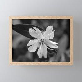 Black and white, white cockle Framed Mini Art Print