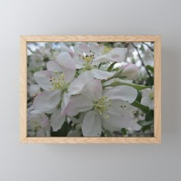 White Spring Blossom Framed Mini Art Print
