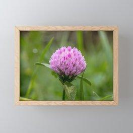 Red clover Framed Mini Art Print