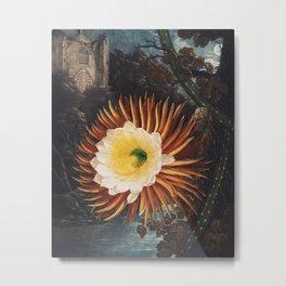 Robert John Thornton - The Night–Blowing Cereus Metal Print