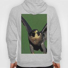 Falcon Follies Hoody