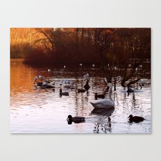 Whooper and Friends Canvas Print