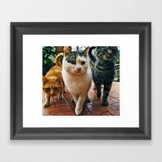 Cats series 02 Framed Art Print