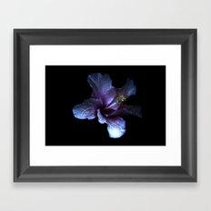 Single flower beauty 3 Framed Art Print