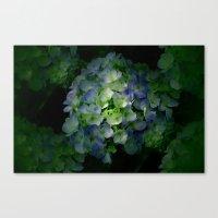 hydrangea Canvas Prints featuring Hydrangea by Sartoris ART