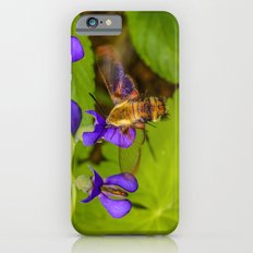 Hummingbird Moth iPhone 6s Slim Case
