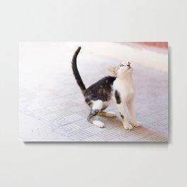 47. Baby Cat in Cuba, Cuba Metal Print