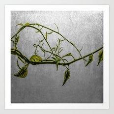 Vine Art Print