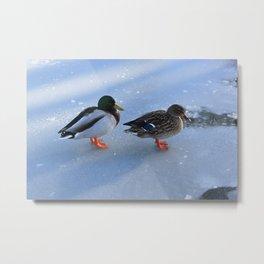Ducks on Ice Metal Print