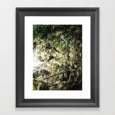 Moss in Trinidad  Framed Art Print