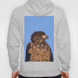 Golden Eagle on the Kenai Hoody