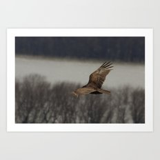 Vultures know the inventory of a flood Art Print