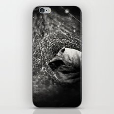 Caught in Your Web iPhone & iPod Skin
