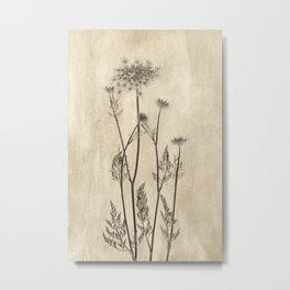 Queen Anne's Lace in Sepia Metal Print