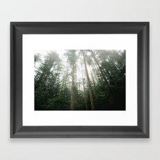 Trees in Olympic National Park  Framed Art Print