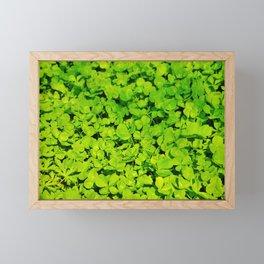 Green Clover Framed Mini Art Print