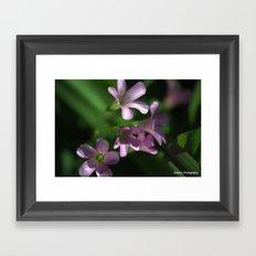 Purple on Green Framed Art Print