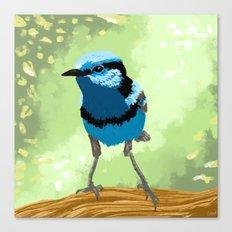 Bird - Superb Fairywren Canvas Print